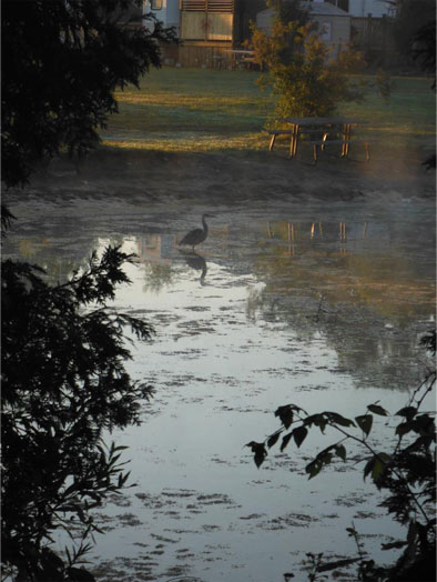 Pond with blue heron
