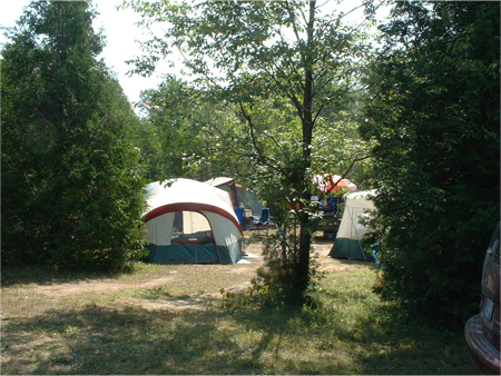 Wooded Tent Campsite